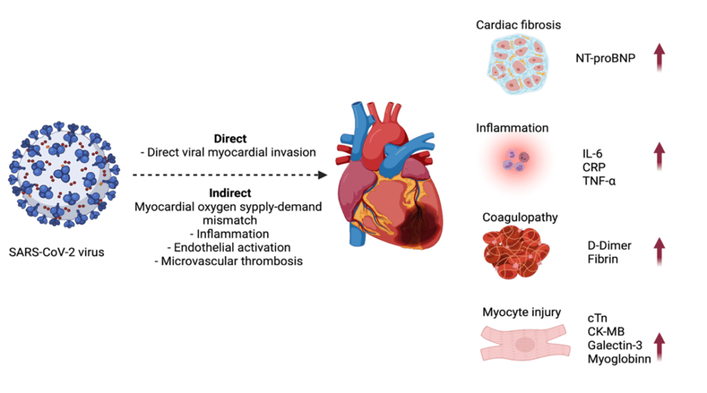Cardiac and Inflammatory Biomarkers associated with COVID-19